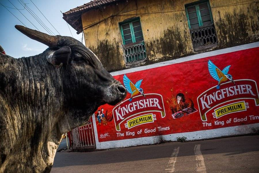 Kingfisher Beer Goa