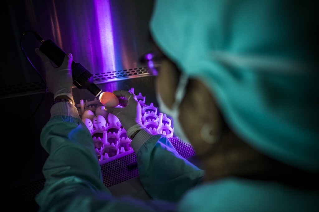 Candling of eggs also takes place at the QC section of Hester Biotechnologies. A scientist at Hester Biotechnologies examines furtile chicken eggs for determining the living embryos for further processing of vaccines.